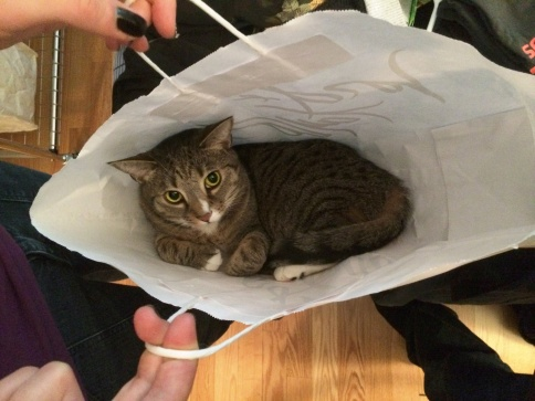 Bearded luna in bag