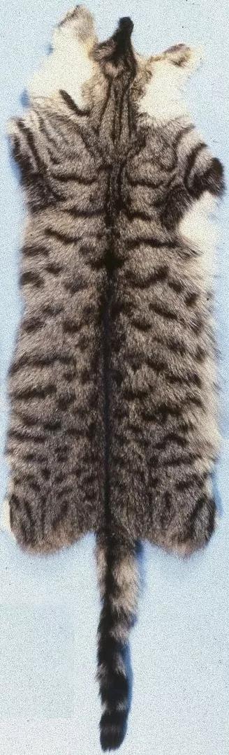 cat_fur