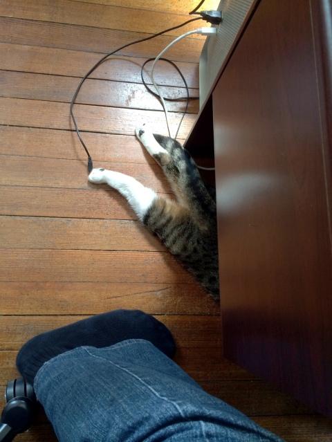 hiding_luna_legs