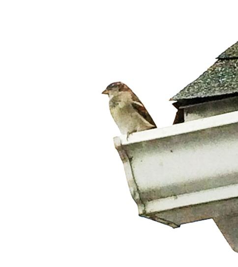 local_bird