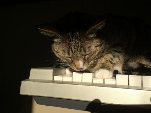 Luna asleep on keyboard