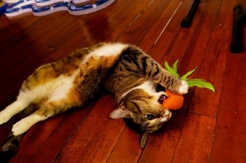 Luna chomps carrot