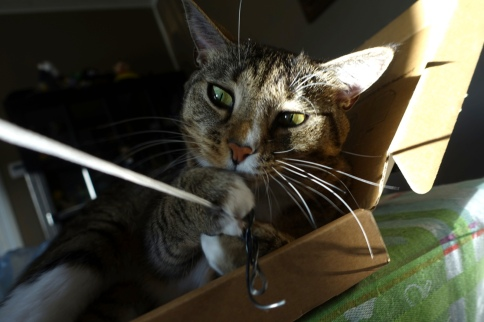 Luna holding thing attached to string