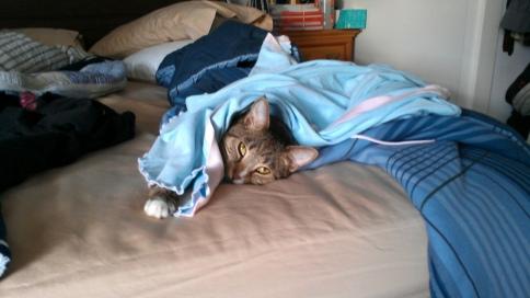 luna in aliona's blue shirt