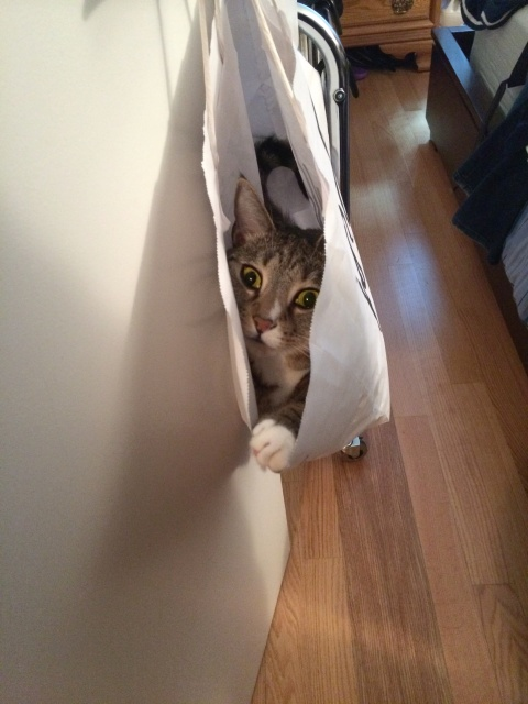Luna in bag hanging on door with paw out