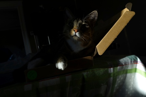 Luna in keyboard box barely visible from darkness