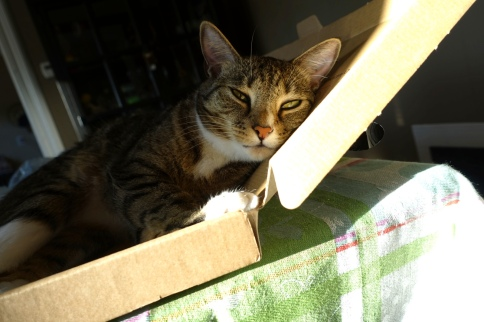 Luna in keyboard box looking forward and head resting to right