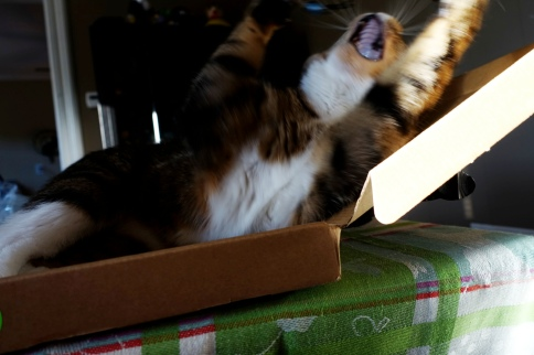 Luna in keyboard box stretching and yawning