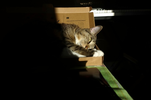Luna in keyboard box with head to side and eye behind tail