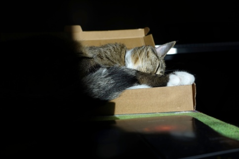 Luna in keyboard box with head to side behind tail