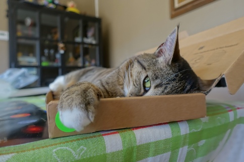 Luna in keyboard box with one wider eye and paw showing