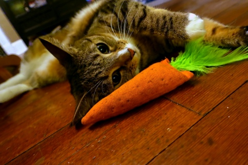 Luna lies down with carrot