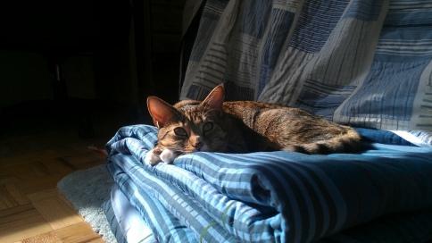 luna on blanket in sun