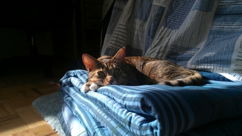 luna on blanket in sun