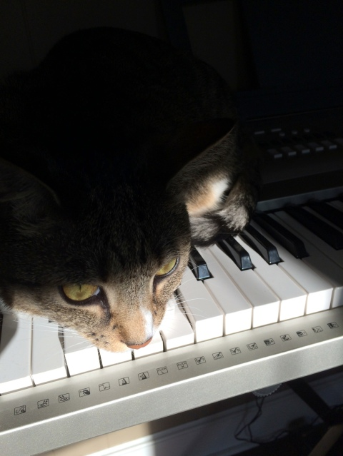Luna on keyboard with top of head in shadows