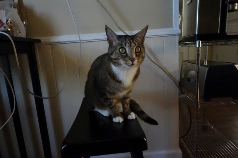 Luna on stool