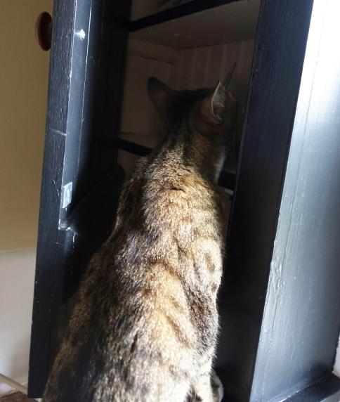Luna peeks in cabinet