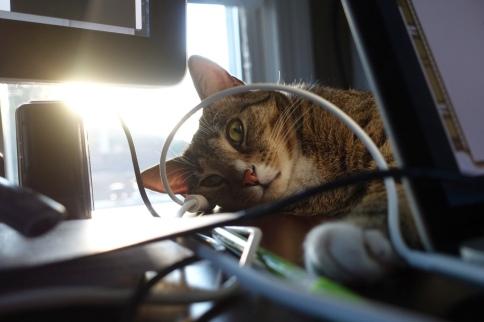 Luna peeks through wires