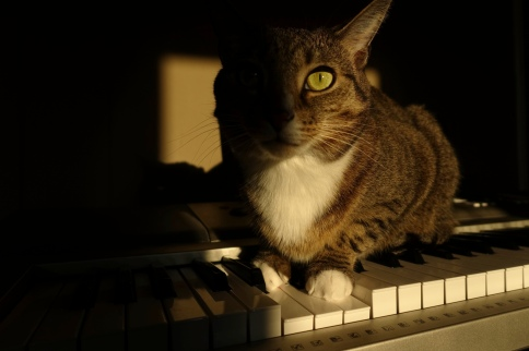 Luna plays dramatic chord on keyboard