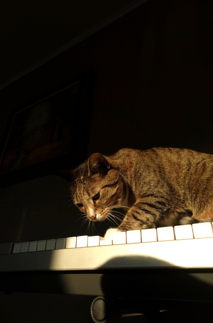 Luna plays note on keyboard