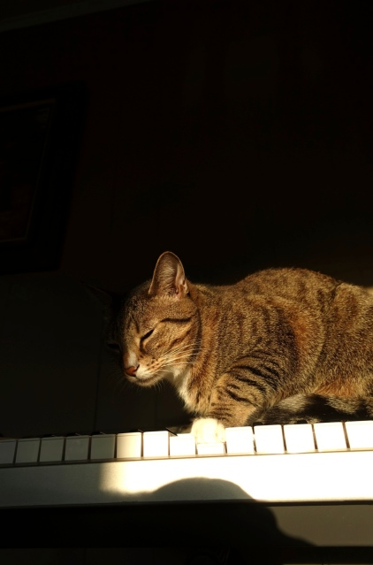 Luna prepares to play keyboard