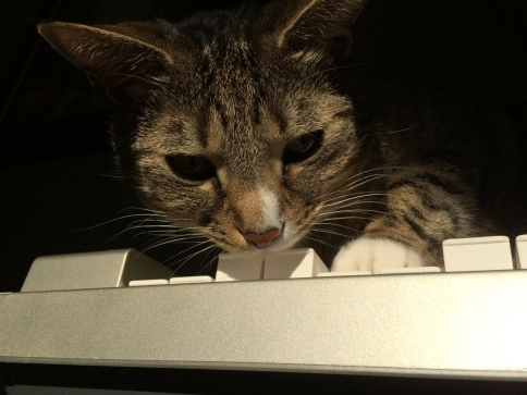 Luna pressing four keys on keyboard, looking down