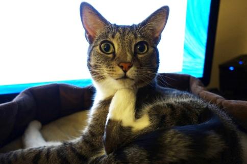 Luna puts leg paw under chin