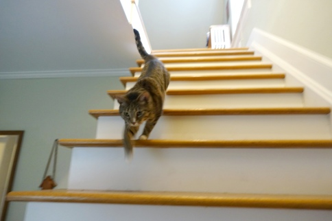 Luna races down stairs