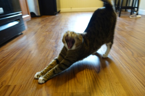Luna stretching and yawning