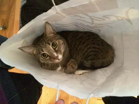 Luna wide-eyed with paws tucked in bag