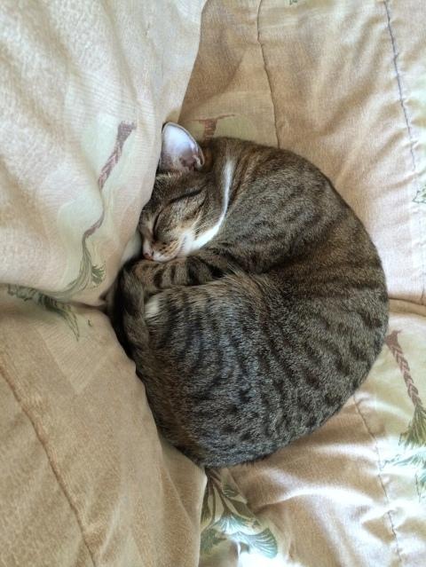 luna_curled_on_sofa