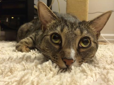 luna_eyes_over_carpet