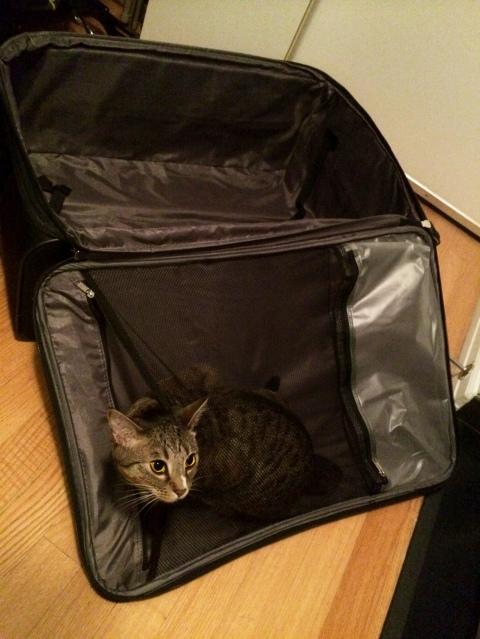 luna_in_black_suitcase
