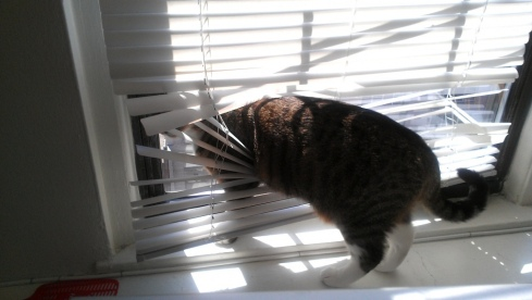 luna_in_blinds