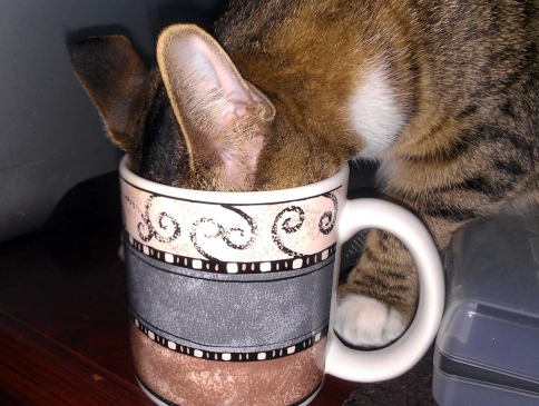 luna_in_coffee_cup