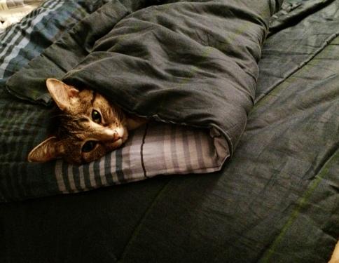 luna_in_folded_blanket