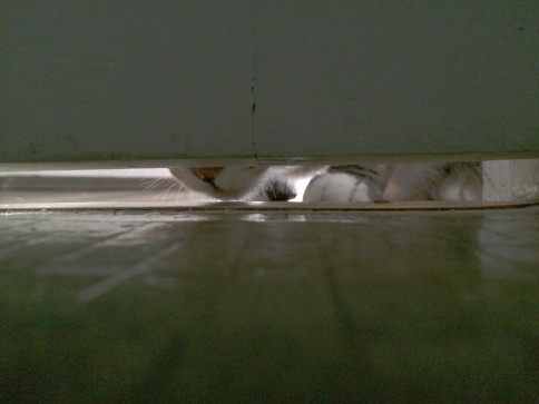 luna_peeks_under_door