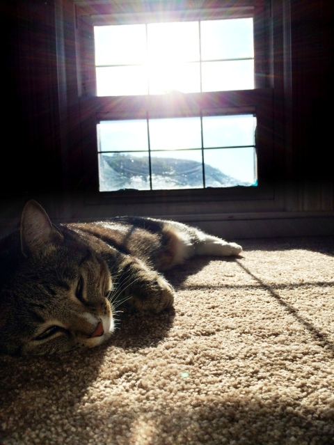 luna_sleeping_near_sunny_window
