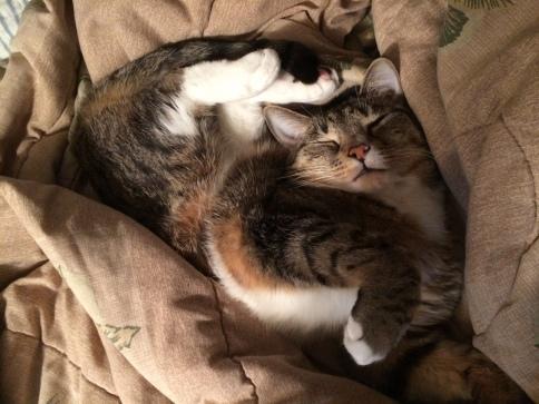 luna_sleeping_with_feet_over_head