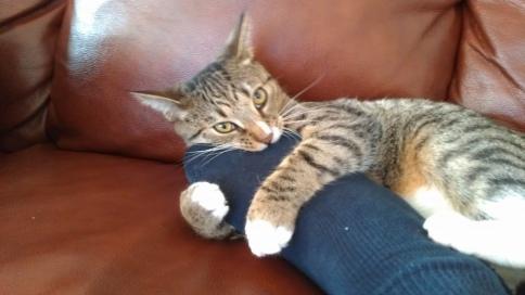 luna_with_foot