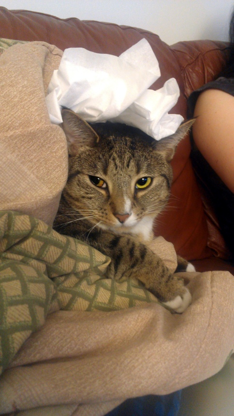 luna_with_paper_towel_on_head