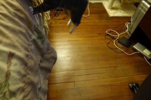 Luna's paws mid-jump