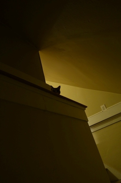 Silhouette of Luna's head from stairwell