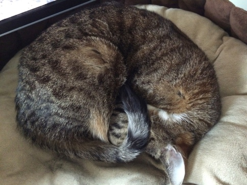 Luna curled up very tightly in bed with tail covering face
