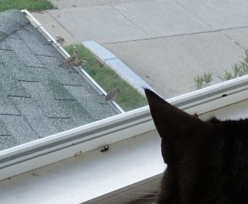 Luna looking at 4 birds through window