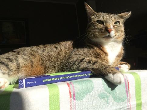 Luna on book looking forward