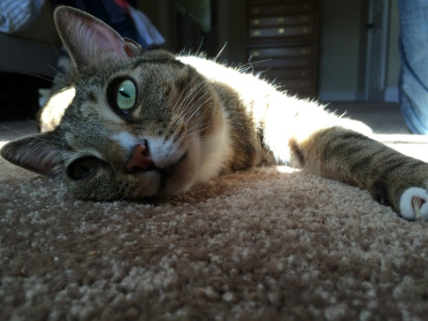 Luna on carpet with eyes more forward than upward
