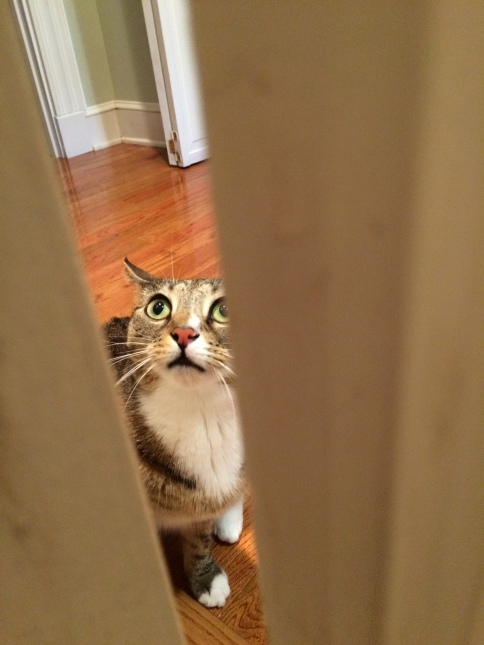 Luna peeking in door