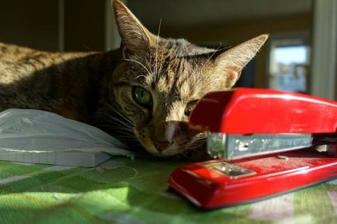 Luna posing with dusty stapler
