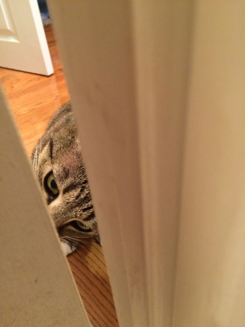 Luna sideways peeking through door